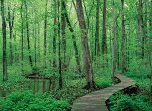 Battle_Creek_Cypress_Swamp2